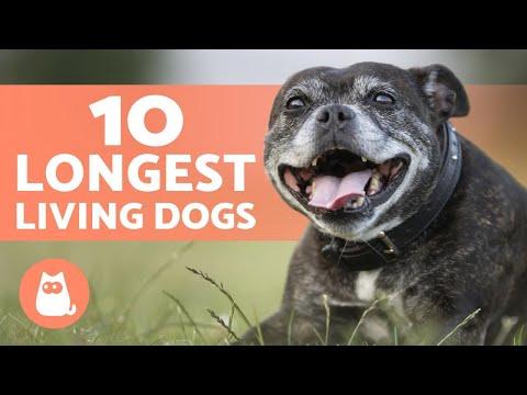 Top 10 LONGEST LIVING Dog Breeds 🐶