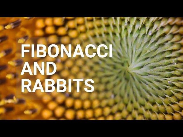 Fibonacci And Rabbits - Rough Cut Creativity