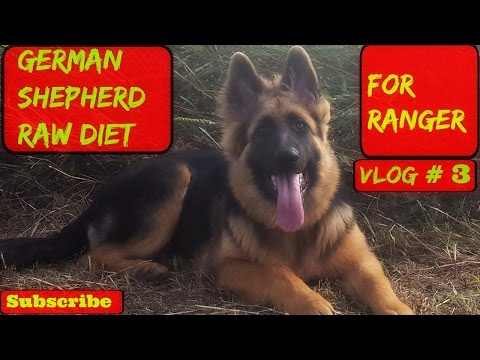 German Shepherd Raw Diet For Ranger (VLOG #3)