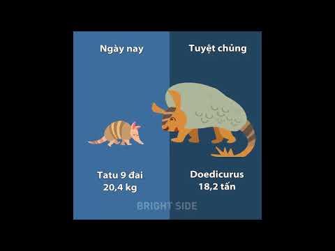 Trọng lượng động vật ngày nay so với họ hàng cổ đại
