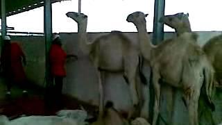 chinari azad kashmir  neelm hindko pakistan geo news perhbhdi  hindko  mumtaz malik