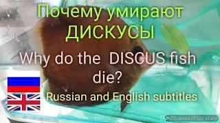 Болезни рыб-паразиты дискусов / Fish diseases-common Discus parasites