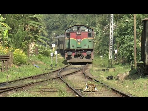 Monkeys trespassing, Kadugannawa railway station, Sri Lanka