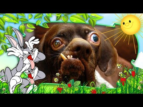 Dogs making funny and cute noises - Cute and funny dog compilation 2017