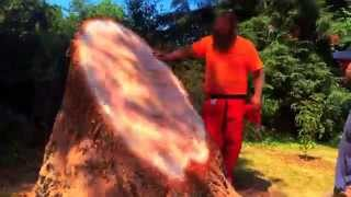 Redwood Stump Chainsaw Carving
