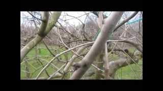 Repeat youtube video Potatura del melo 2° parte