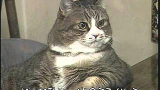 ラブ・ラブ・ミンキーモモ  小山茉美  【ネコカラVer】 小山茉美 検索動画 24