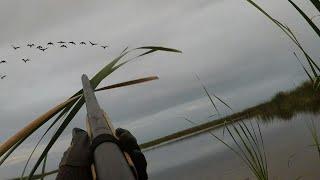Black Bellied Whistling Ducks Decoying - Late Season South Florida