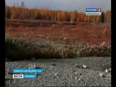 В окрестностях Урала туристы нашли останки динозавра