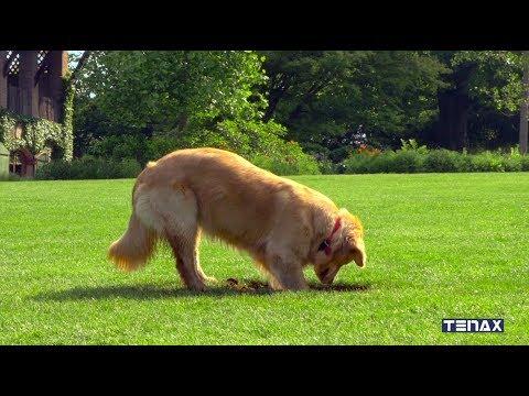 Вопрос: Для чего собака летом роет яму возле своей будки?