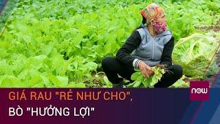 Đắk Nông: Giá rau