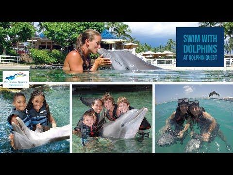 Swim With Dolphins In Hawaii & Bermuda | Dolphin Quest