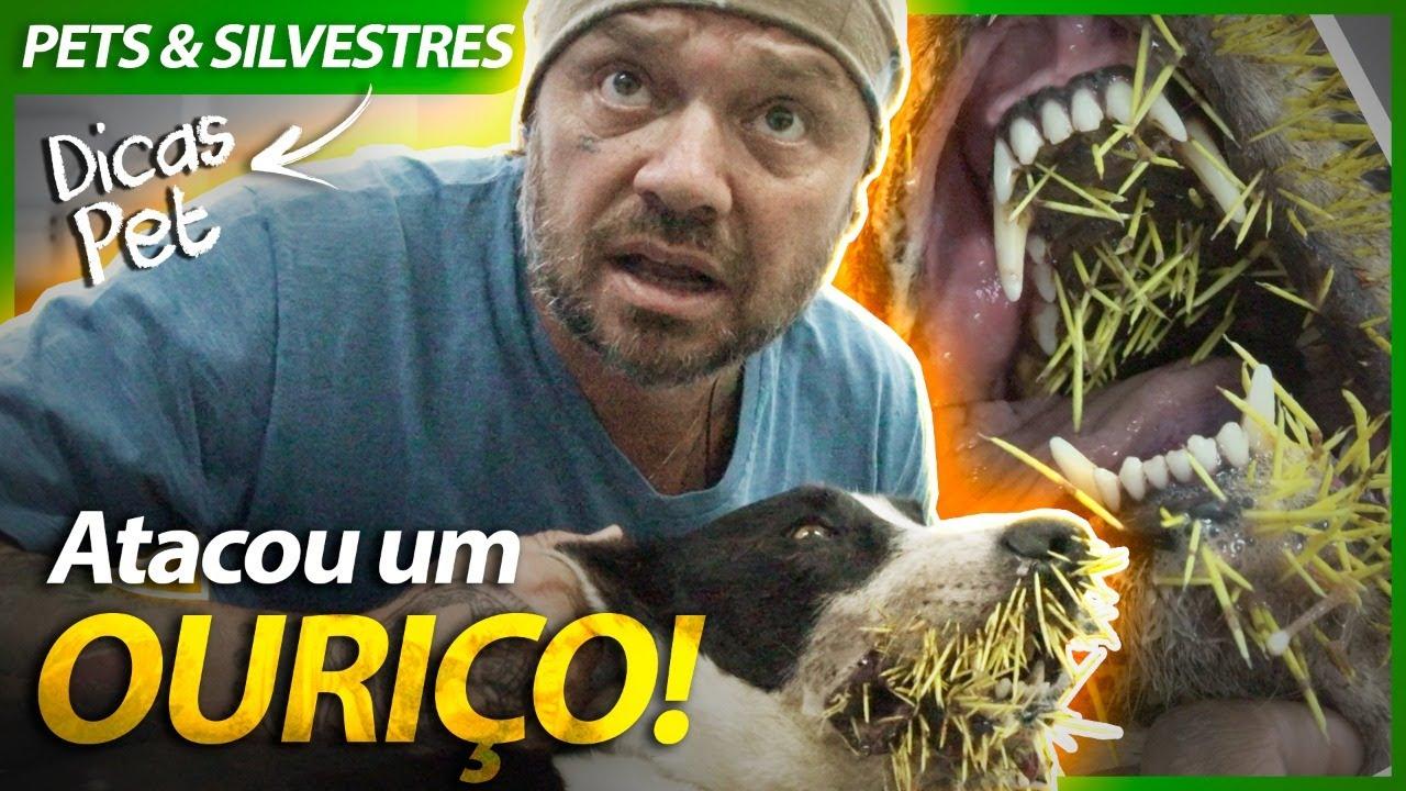 CÃES ENFRENTAM OURIÇO CACHEIRO E SE DÃO MAL! | RICHARD RASMUSSEN