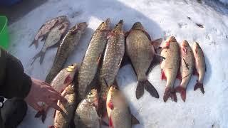 НАКОНЕЦ ТО ВЕСНА Первые дни рыбалки сетями Отличный УЛОВ НАЛИМ ЩУКА ЛЕЩ ЯЗЬ