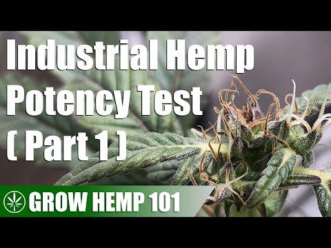 Industrial Hemp Potency Test Indoor Grow