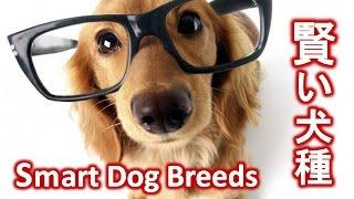 【なるほど!】賢い犬種ランキング~Top 10 Smartest Dog Breeds 犬は賢...