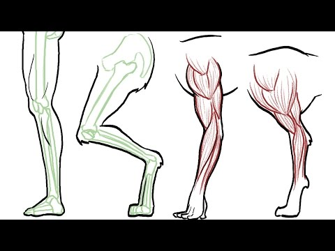 How to Draw Animal Legs (dogs, cats, horses, bears etc
