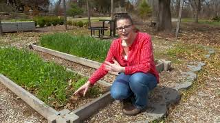 Terminating Cover Crops to Prepare for the Garden