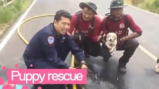Charred Puppies Rescued from Field Fire