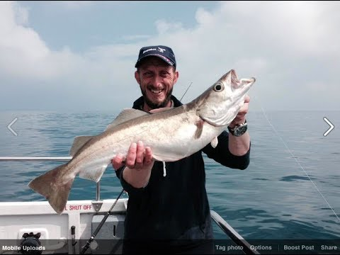 Catching Giant Pollock, Fishing The South Devon Coast