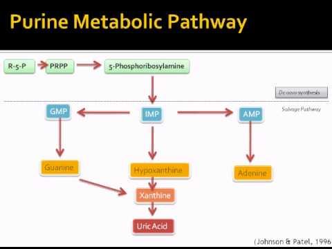 Uric Acid Pathway Purine metaboli...
