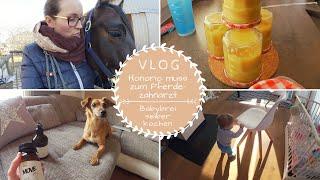Termin beim Pferdezahnarzt |Babybrei kochen TM5 |Zusatzfutter für Pepe |VLOG |Kathis Daily Life