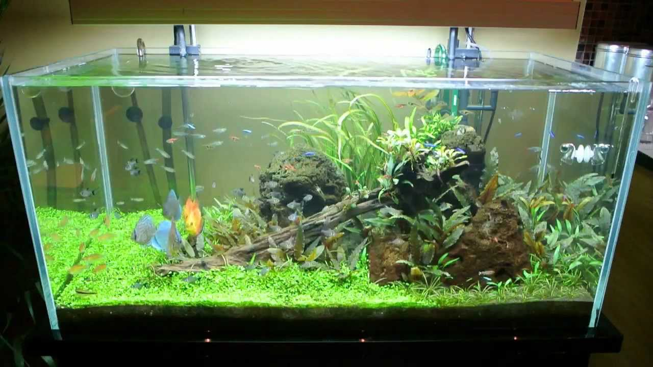 All Pond Solutions Open Top Aquarium Fish Tank 6wks Update