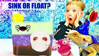 Fizzy and Phoebe Try a Halloween Will It Sink or Float Density Experiment