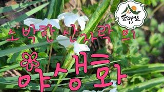 흰제비꽃 산림 임업 농업 약초  약용식물 제비꽃 야생화…