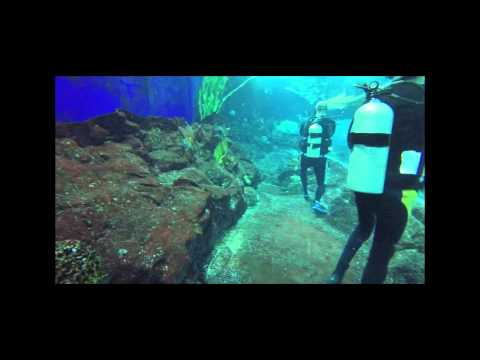 dive with sharks - underwater world singapore