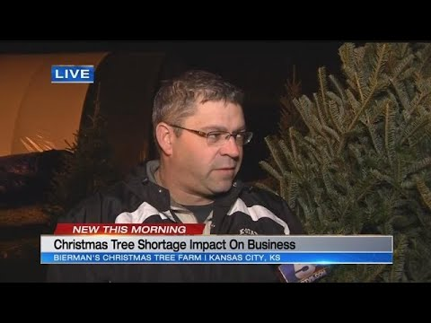 Christmas tree shortage may lead to higher prices in the metro