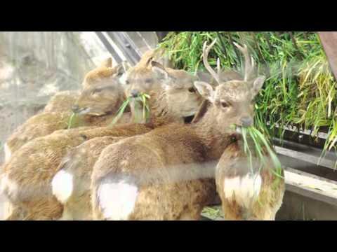 About Inogashira Park Zoo
