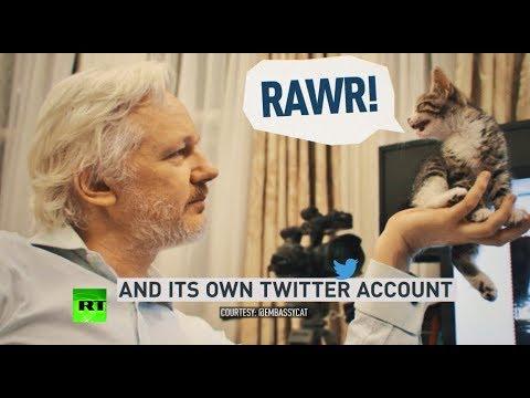 Assange: 2000+ days in Ecuadorian Embassy