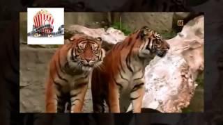 dubbing zwierząt Ruciński Giza