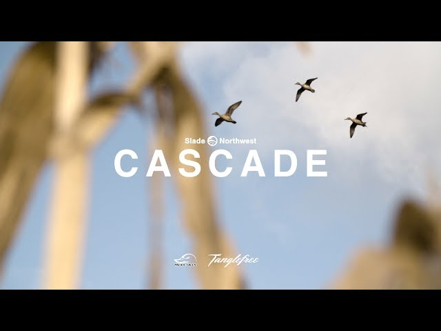"Duck hunting - ""Cascade"""