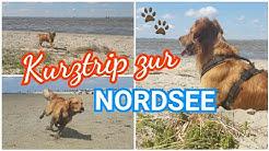 Geheimstrand nahe Emden / Hundestrand Norddeich