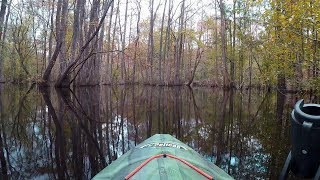 SC Kayak Camping Adventure on the Edisto River with the Colonel!