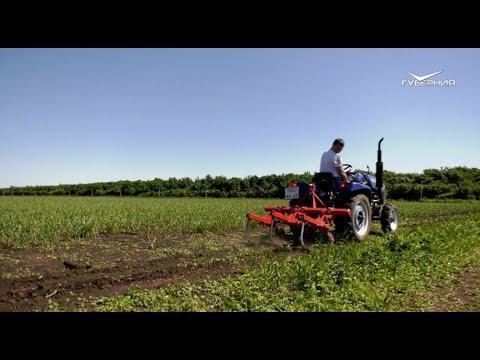 В Самарской области впервые занялись промышленным выращиванием чеснока