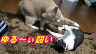 猫こむぎ&♂猫だいずのお馴染み喧嘩の様子ですが・・・今回はゆる~ぃ闘...
