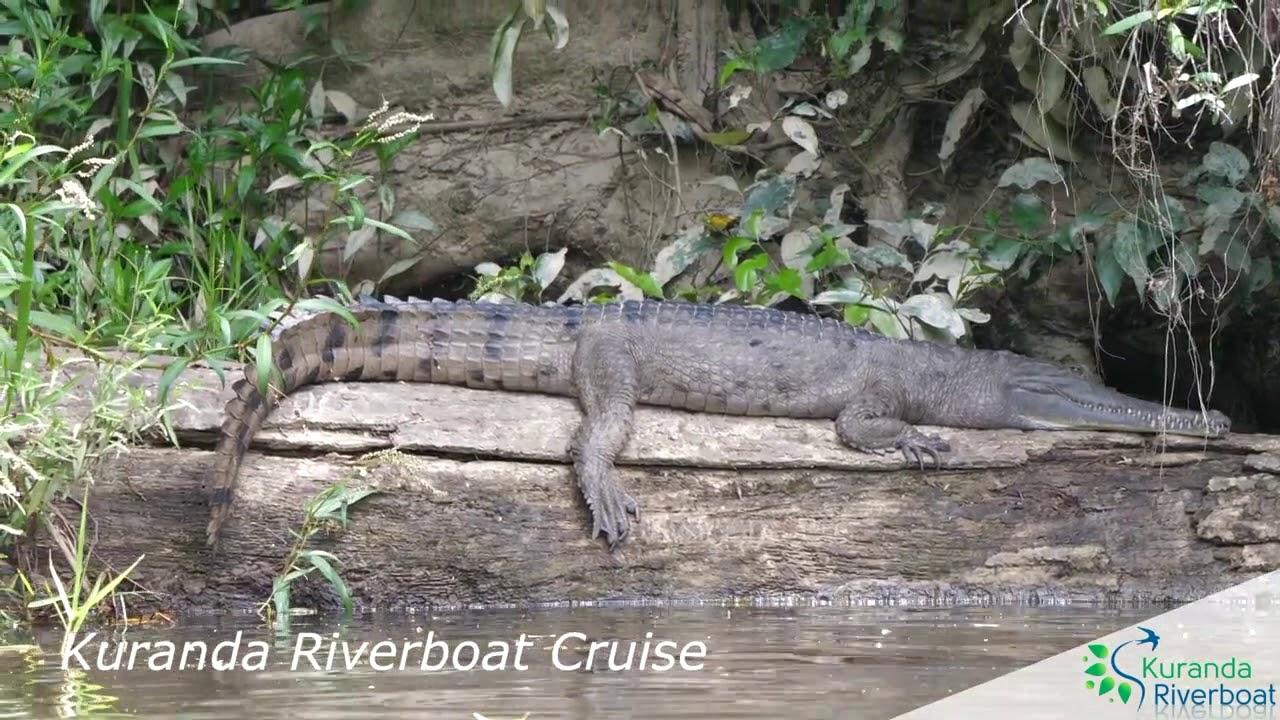 video Kuranda Riverboat Tour