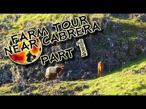 Sustainable Organic Farming In Cabrera - Let's Visit The Farm - Part 1