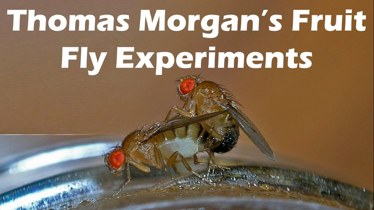drosophila melanogaster lab report the arrogant scientist occasional musings and opinions on the arrogant scientist occasional musings and opinions on middot drosophila lab handout fa