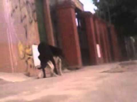 Cogiendo de perrito a su rica vieja - 2 part 4