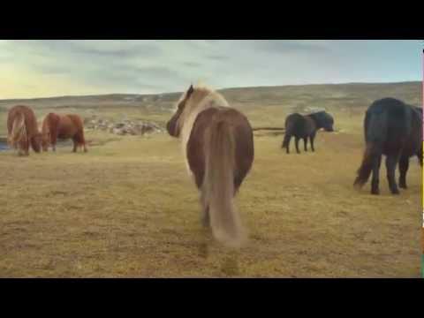 Chú ngựa nhảy điệu moonwalk của Michael Jackson