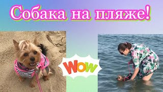 Собака на море//Собачий пляж//Собачий пляж в Италии//Собака купается в море//Подводная съёмка