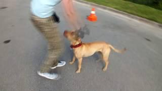 Школа Дрессировки собак. Как правильно воспитывать свою собаку