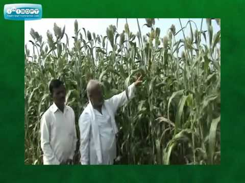 Migrow Agro Products India (Manufacturer of Bio Organic agricultural solutions)