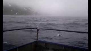 Курильские Острова - в море Видео №12 - туман, бакланы(Красиво и только)), 2015-07-21T00:36:23.000Z)