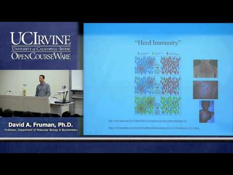 Biological Sciences M121. Immunology with Hematology. Lecture 06. Antibody Structure & B-Cells.