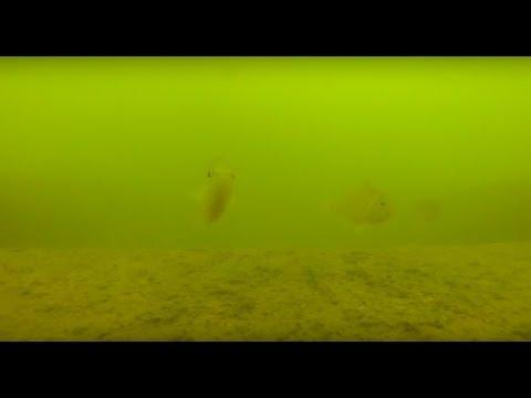 Lake Murray SC Wreck Diving Scuba Diving Exploration Part 1